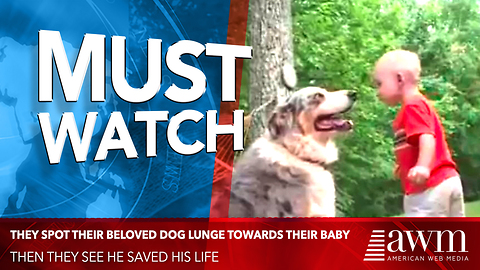 Out Of Nowhere They Spot Their Beloved Dog Lunge Towards Their Baby. Then They See He Saved His Life