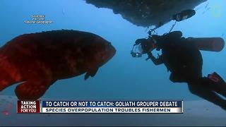 You could soon hunt goliath groupers in Florida
