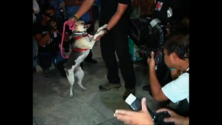 Hero Dog To Become Animal Ambassador - Video