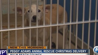 Peggy Adams offers Christmas Day delivery - Video