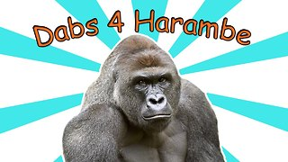 HARAMBE Has A WEED STRAIN on theFeed! - Video