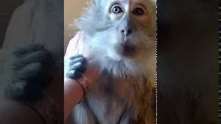 Monkey and Owner Chat and Chill - Video