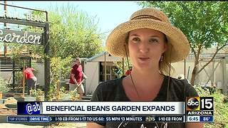 Beneficial beans garden expands - Video