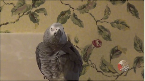 Einstein The Parrot Reminds Himself To Be Sweet And Apologizes For His Bad Behaviours