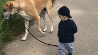 Adorable friendship between baby and huge dog