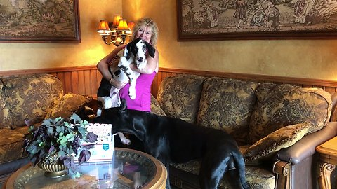 Great Dane and Puppy Open Thanksgiving Gifts from You Tube Fairy God Mother