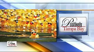 Positively Tampa Bay: Duck Race - Video