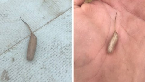 Mysterious 'alien' creature discovered by backpacker in Australia baffles the internet