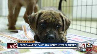 Good Samaritan saves abandoned litter of puppies - Video
