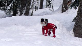 Dog which turns into giant snowball forced to wear onesie outside