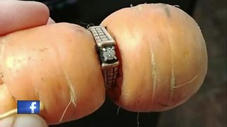 woman finds lost ring on carrot - Video