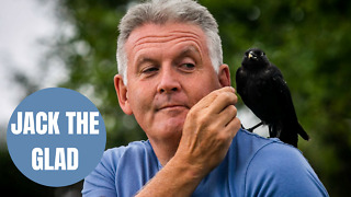Incredible video shows friendship between a man - and a wild JACKDAW