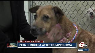 Pets in Bloomington after Hurricane Irma - Video