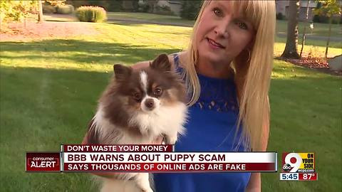 BBB warns about puppy scam