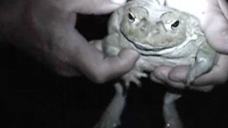 Protect your pet against poisonous toads - Video