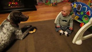 Dog barks on command, sends baby into giggle fit - Video