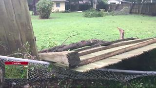 Hurricane damage reported in Hillsborough County - Video