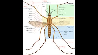 How to Control Mosquitoes Naturally