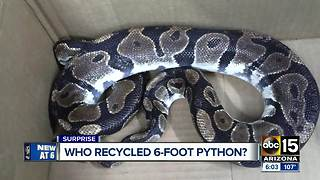 6-foot python found at recycling plant - Video
