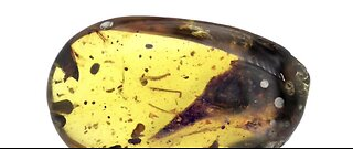 Tiny dinosaur preserved for 99 million years