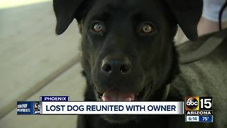 Valley woman reunited dog who went missing for more than a month - Video