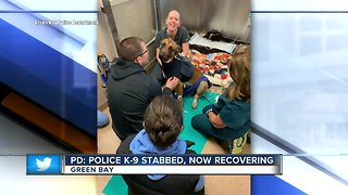 GBPD: Police dog stabbed during encounter with suspect