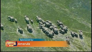 Amarula Wildlife Direct - Video