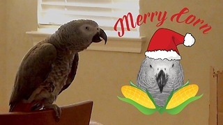 Politically correct parrot has a unique holiday greeting - Video