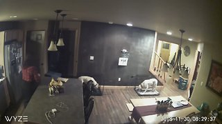 Home Security Camera Catches the Moment Earthquake Shakes Palmer