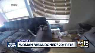 Several animals seized in cruelty cases in Surprise - Video
