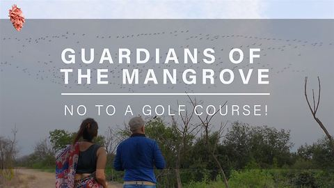 Guardians of the Mangrove