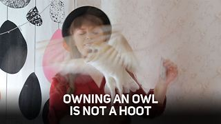 Always wanted a Harry Potter owl? Here's the reality - Video