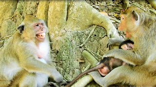 Popeye Want To Have New Baby Monkey Now - Video