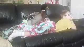 Boy Spends His Sunday Mornings Watching TV With His Pet Duck