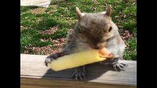 A Woman And A Squirrel Share An Apple - Video