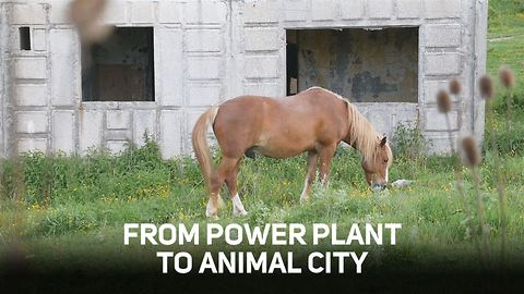 How a Utopian city became home to horses and cats