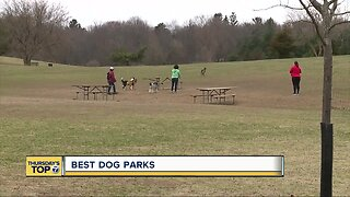 Best dog parks in metro Detroit
