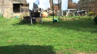 Duck and Dog Get Into Backyard Chase