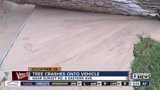 Tree crashes onto vehicle - Video