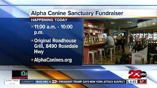 Alpha Canine Sanctuary Fundraiser - Video