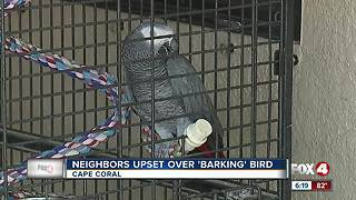 'Barking' bird lands owner written warning from animal services - Video