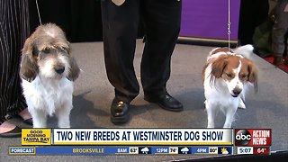 Two new breeds debuting at 143rd Westminster dog show