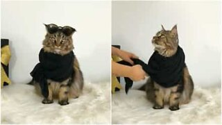 Meet Yves, the fashionista cat