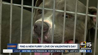 Celebrate Valentine's Day with a new furry friend!