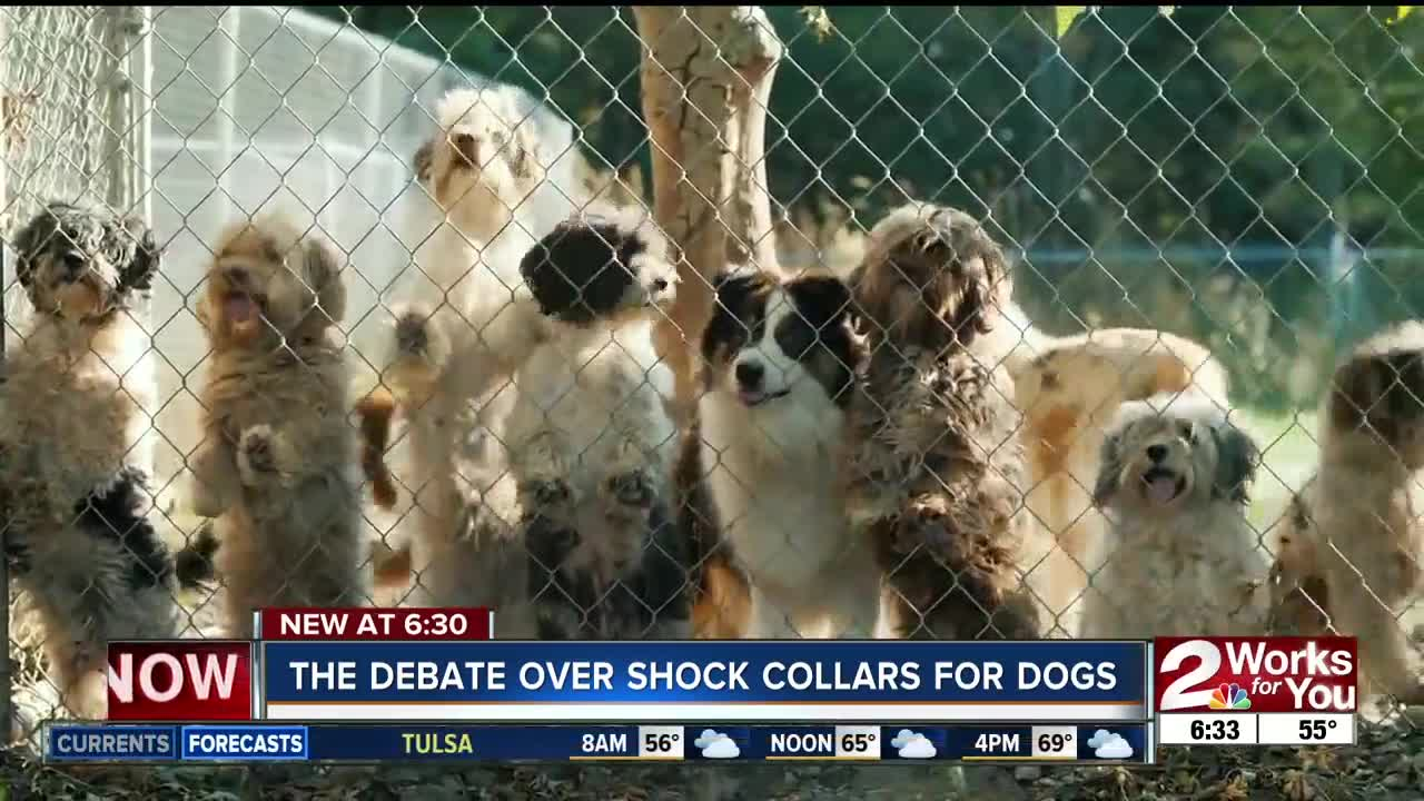 The debate over shock collars for dogs