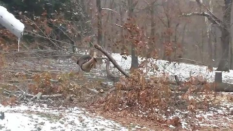 Missouri man is sent flying while chainsawing falling tree