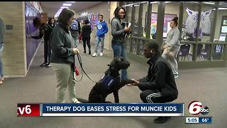 Therapy dog eases stress for Muncie students - Video