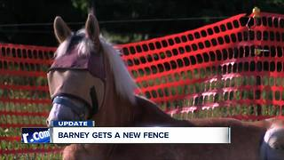 Blind horse gets new fence thanks to your donations