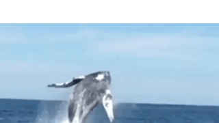 No Fish Biting Off Jersey, but Whale Breach More Than Compensates - Video