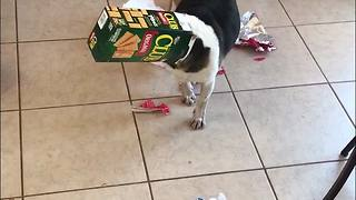 Dog Gets Caught After Making A Huge Mess - Video